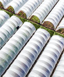 Farming Plant Mast